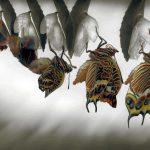 Mariposas – El origen