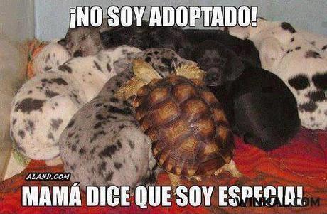 tortuga con perros cachorros no soy adoptado mama dice que soy especial