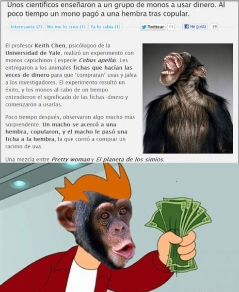 unos cientificos enseñaron a un grupo de monos a usar dinero al oco tiempo un mono pago a una hembra tras copular