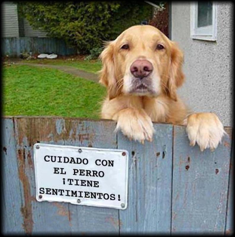 cuidado con el perro tiene sentimientos