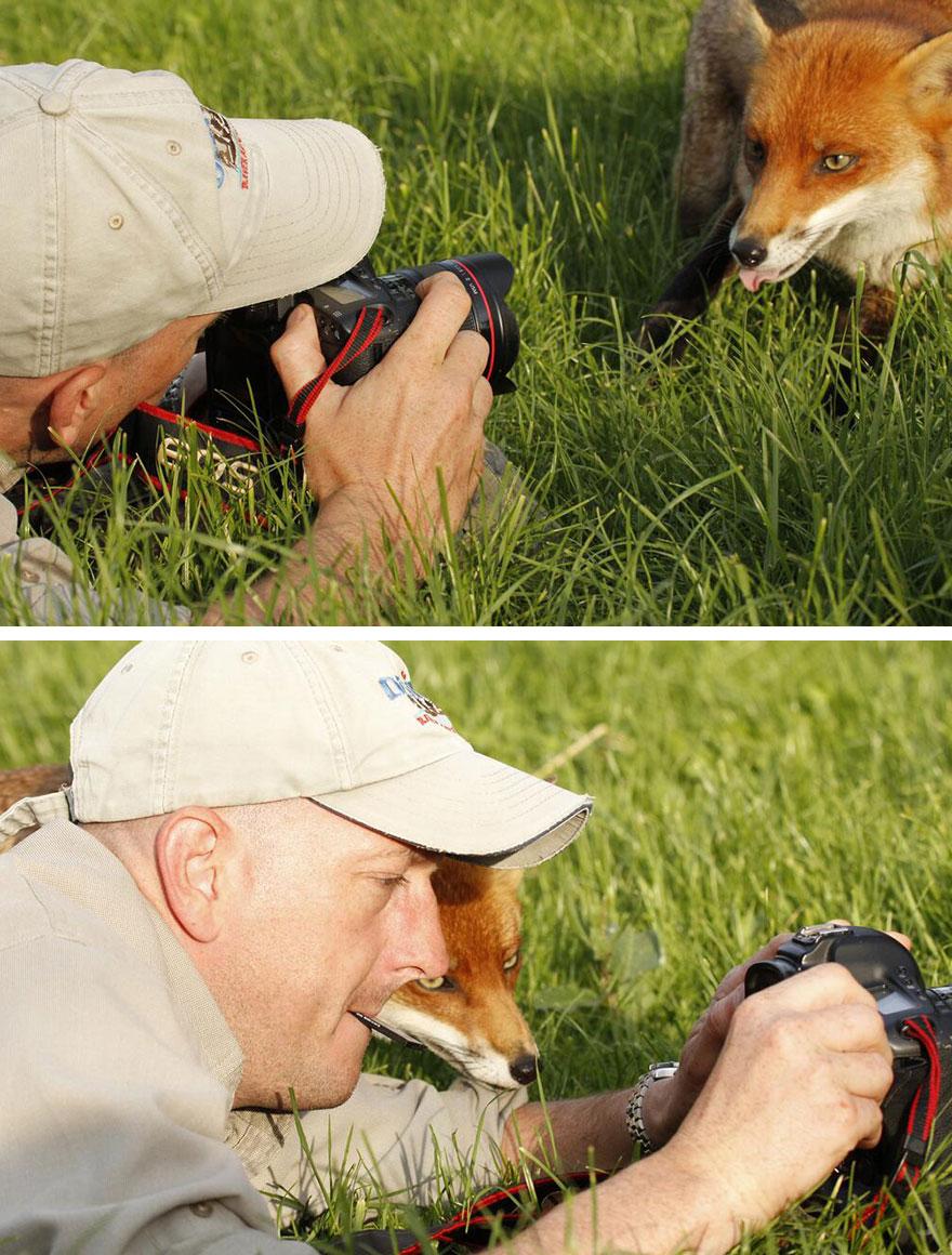 fotografo zorro viendo que tal ha salido la foto