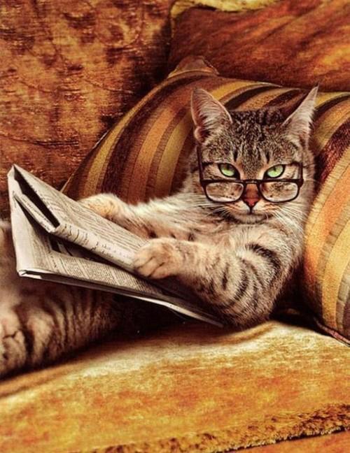 gato whattt