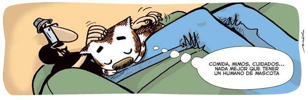 La mascota favorita de los gatos