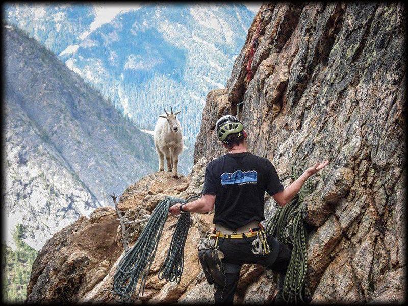 alpinista se encuentra con cabra