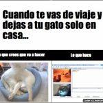 Cuando te vas de viaje y dejas a tu gato solo en casa…
