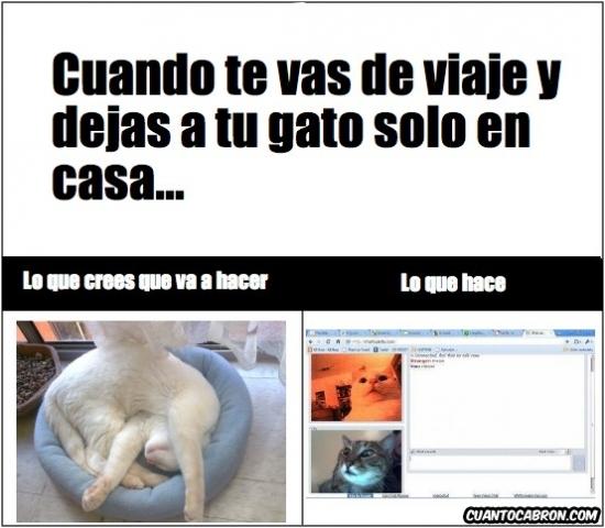 Cuando te vas de viaje y dejas a tu gato solo en casa...