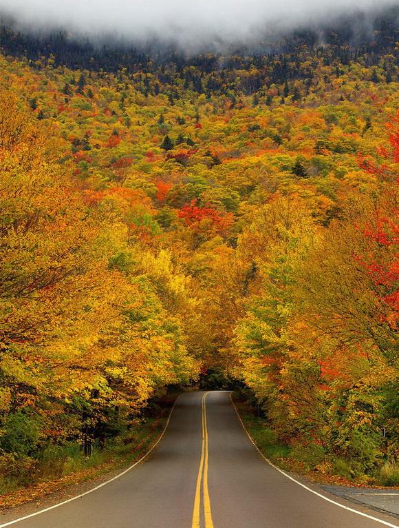 Túnel de árboles