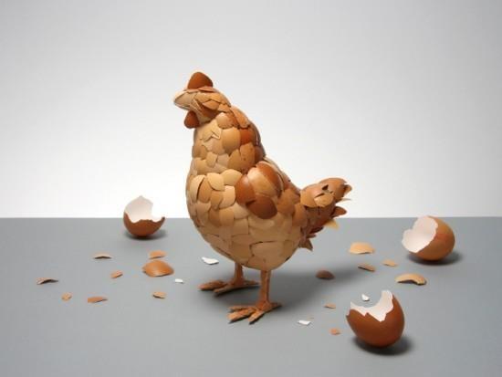 Gallina con cáscaras de huevo
