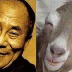 Parecidos razonables: Dalai Lama y cabra feliz