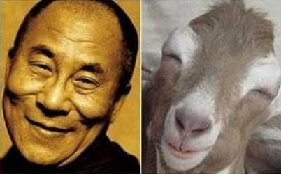 parecidos razonables Dalai Lama - cabra feliz