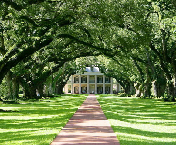 tunel de arboles Oak Alley Plantation Tree Tunnel, USA