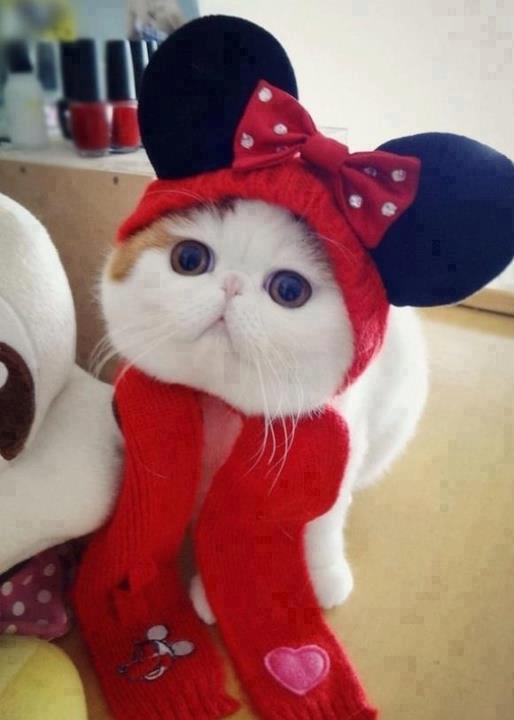 gatito disfrazado de minnie