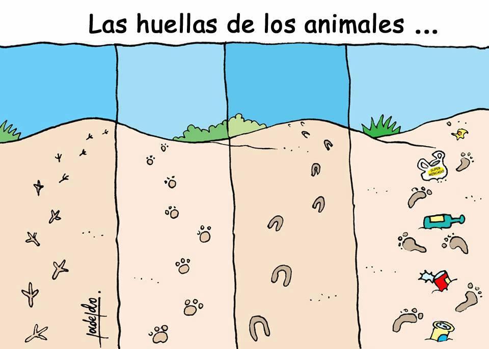 las huellas de los animales