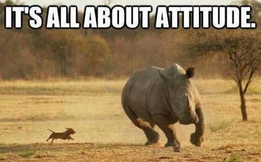 perrito persiguiendo a rinoceronte its all about attitude