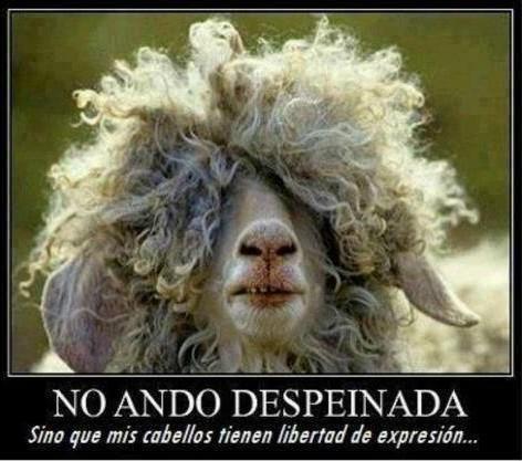 No ando despeinada, sino que mis cabellos tienen libertad de expresion