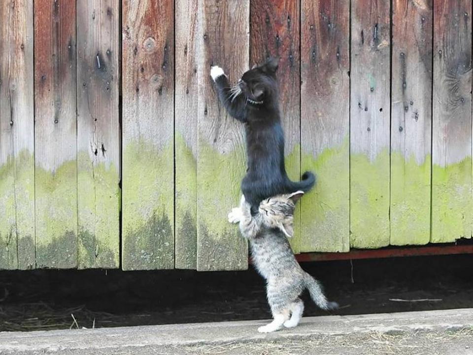 gatitos ayudandose a subir un muro