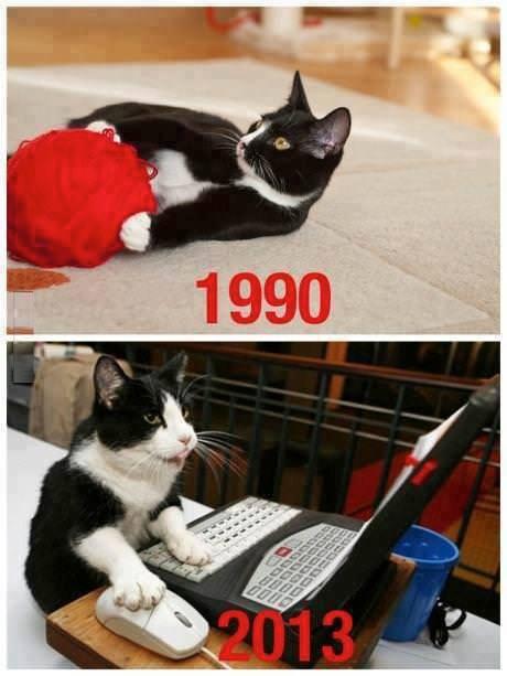 gatos 1990 jugando con ovillos gatos 2013 con ordenador