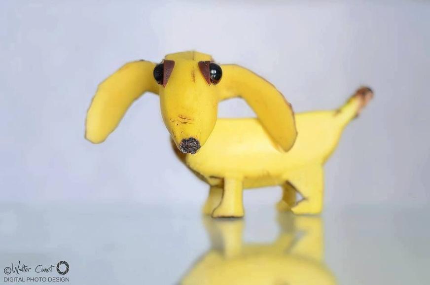 Perro-plátano