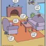 La vida de un gato cualquiera