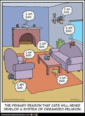 gato i am god