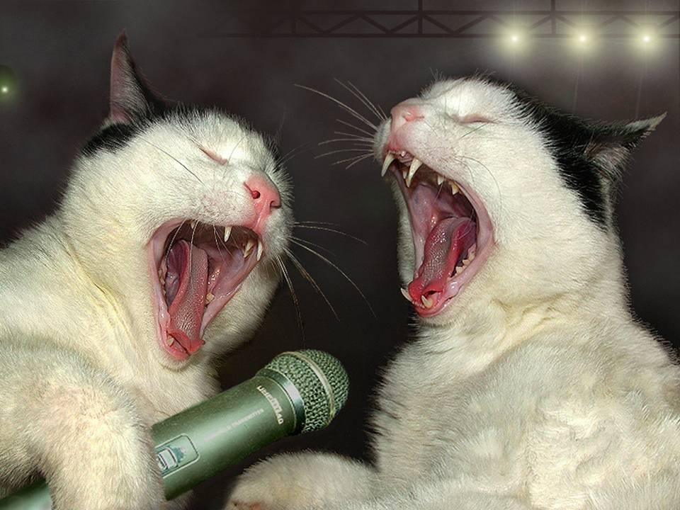 Gatos heavies