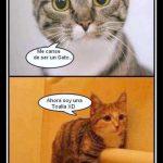 Me cansé de ser un gato