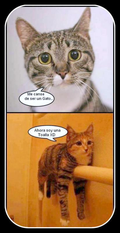 me canse de ser un gato ahora soy una toalla