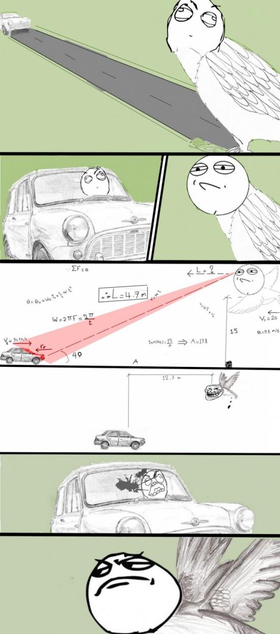 meme-pajaro-fisica-cagada-en-coche
