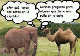 Diálogo entre un elefante y un camello