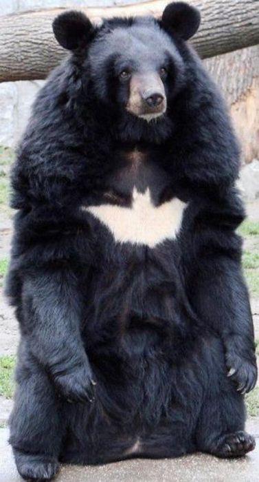 Oso Batman