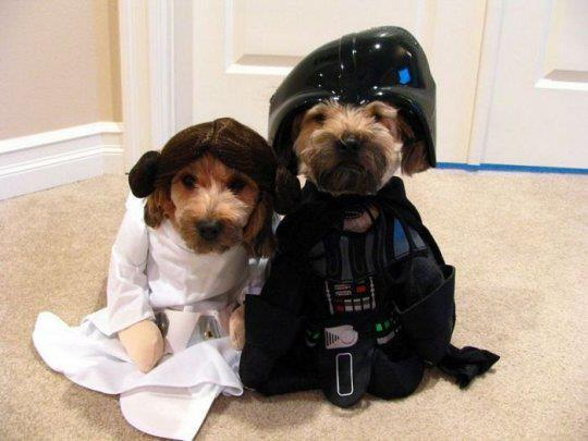Star Wars perruno