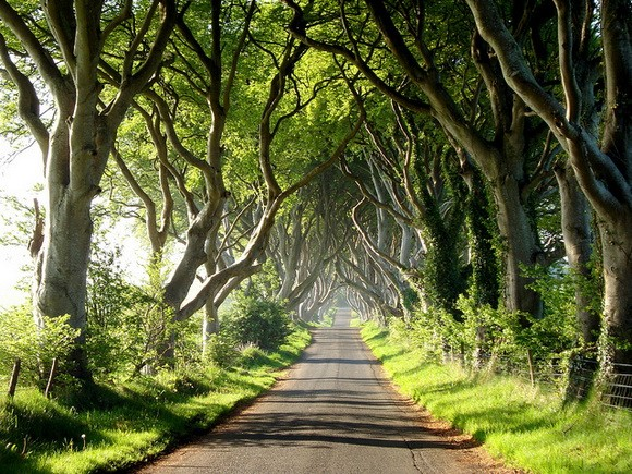 The Dark Hedges, UK - arboles sobre carretera