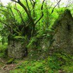 Casa con árboles