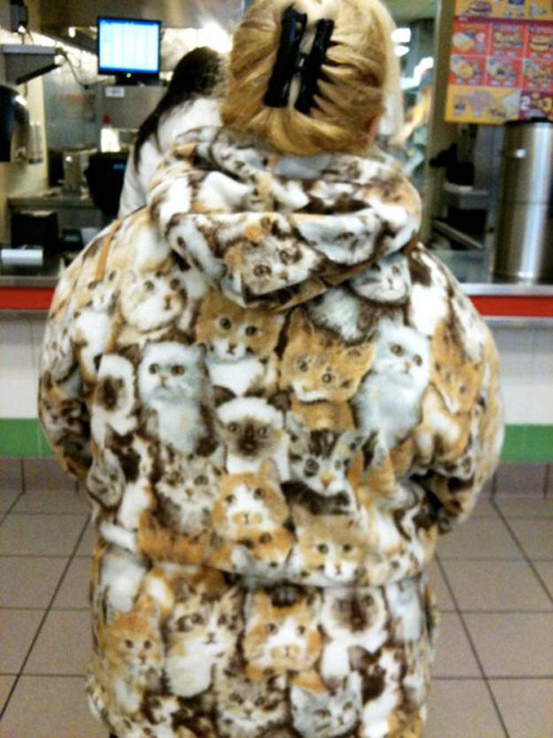 Abrigo de gatos