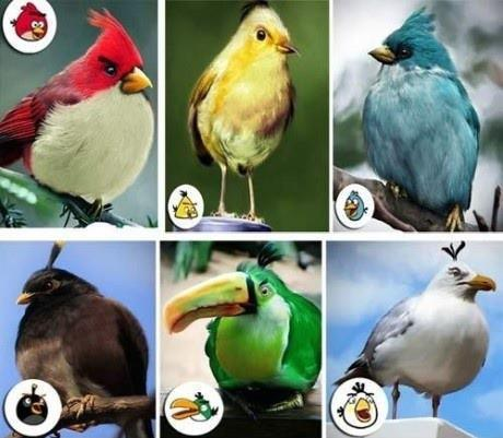 Los Angry Birds reales