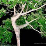 Árbol bailarina