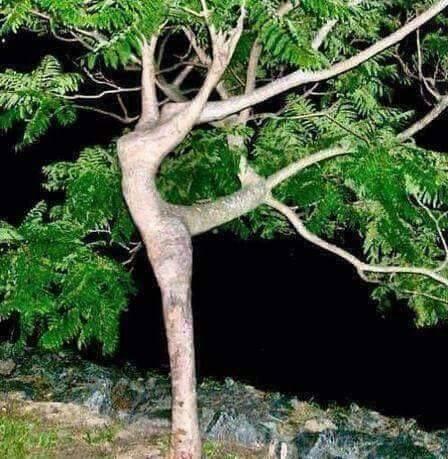 Árbol danzante