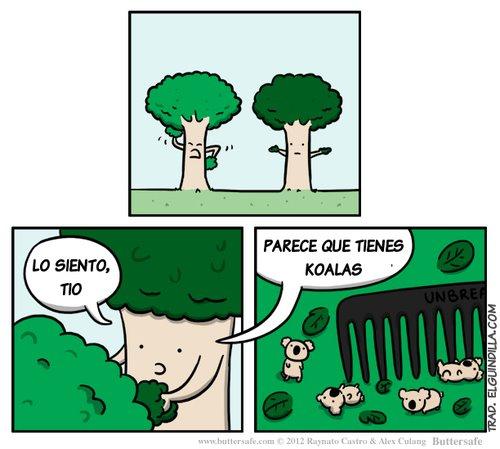 Amigo árbol, parece que tienes koalas