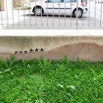Arte callejero – Reyes magos