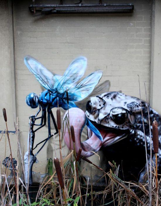 Arte urbano - Rana y mosquito