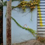 Arte Urbano – Aprovechando la enredadera para caminar