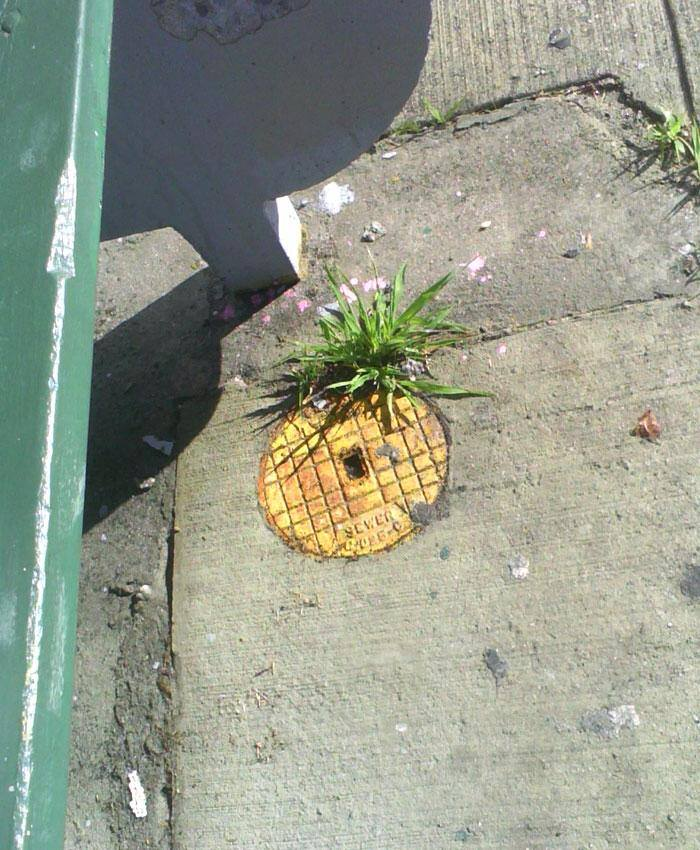 Arte urbano - Piña improvisada