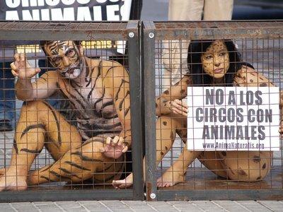 Bodypainting - Tigres