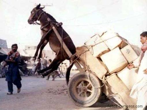 burro carro demasiado peso