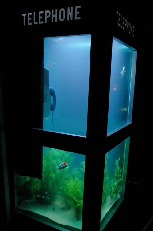 Cabina telefónica acuario