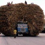 Camión lleno de paja – Nivel WTF