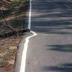 Maldito tronco