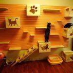 Un hogar de ensueño… para un gato