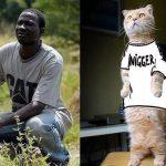 Cat – Nigger