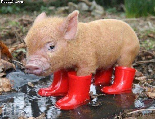 El cerdo con botas